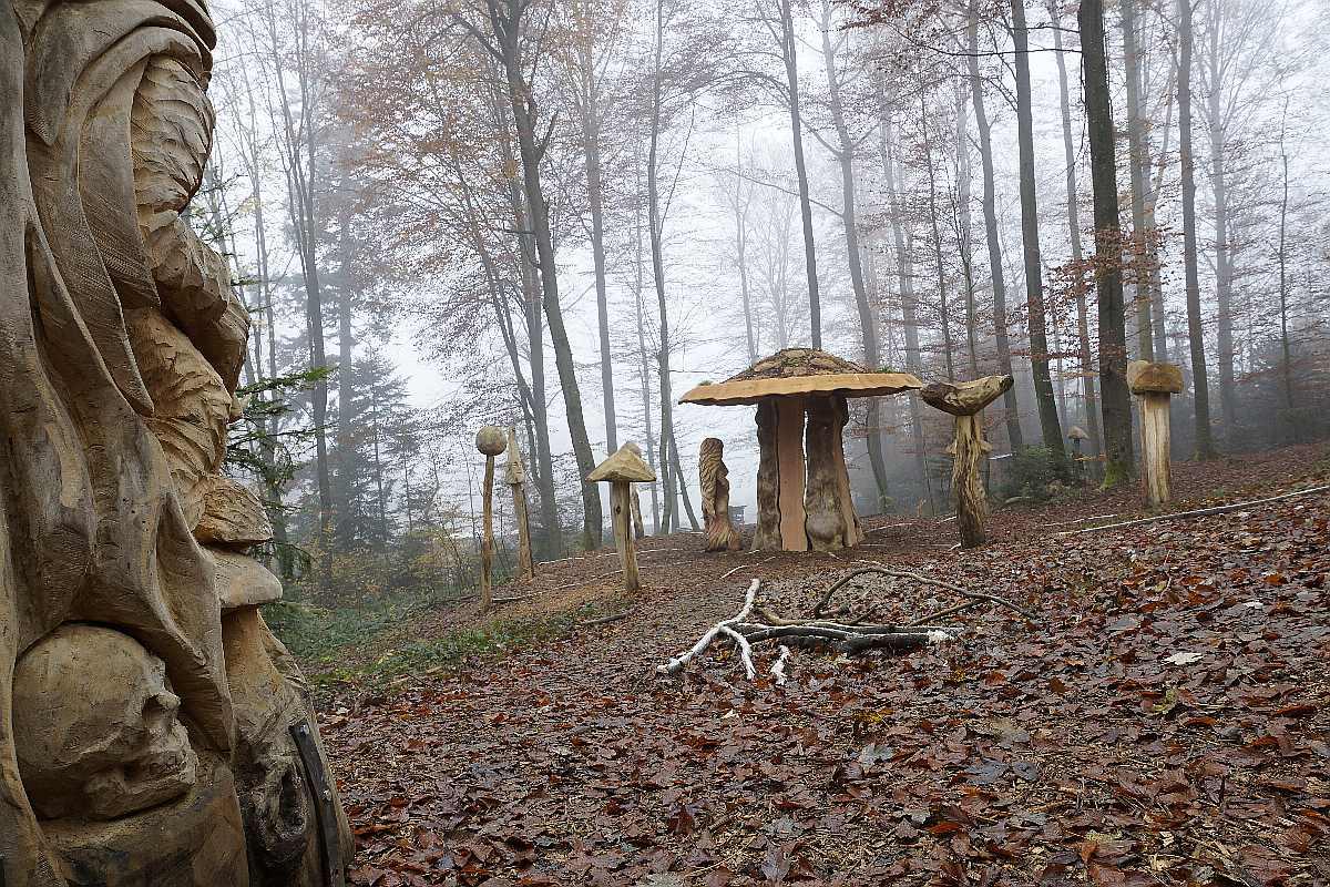 Hexenring , Herbstgrau, thomas rees 09