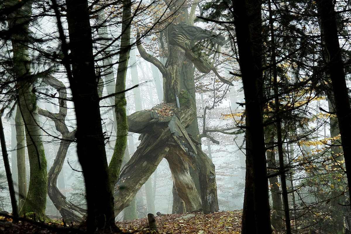 Hexenring , Herbstgrau, thomas rees 12