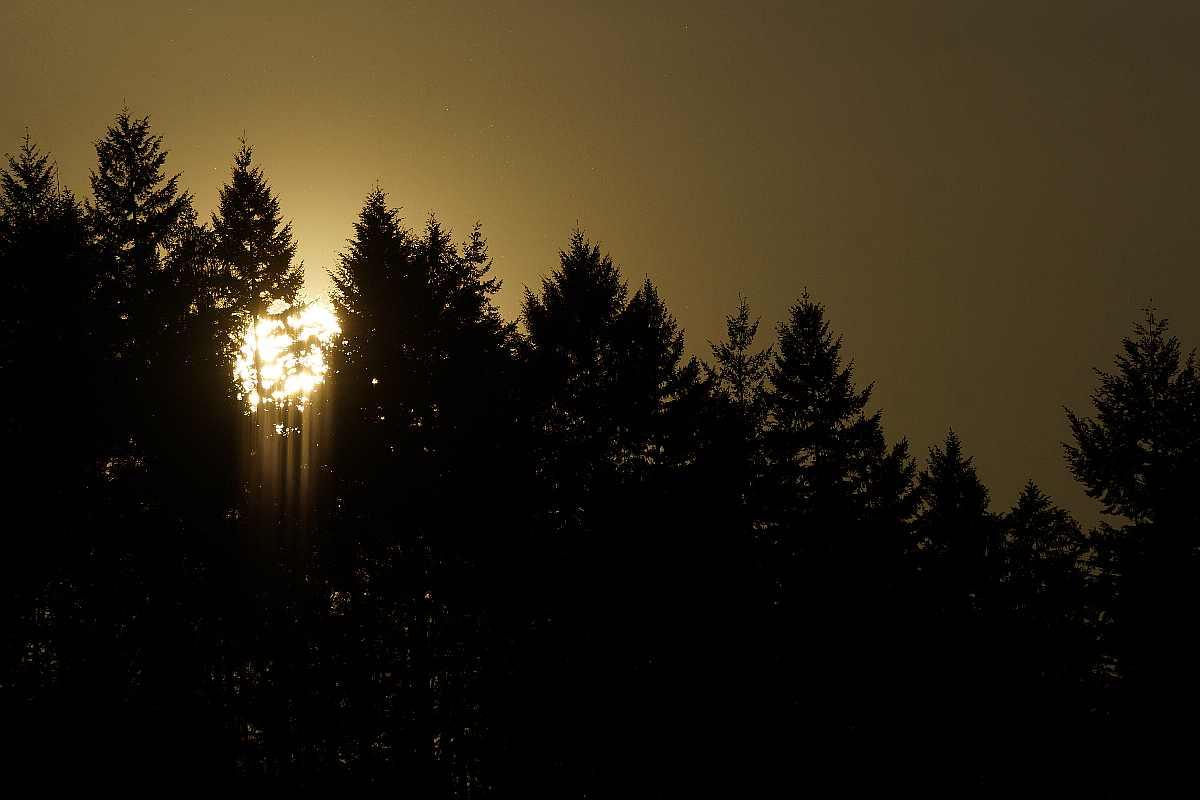 Singen am Baum der Erkenntnis47